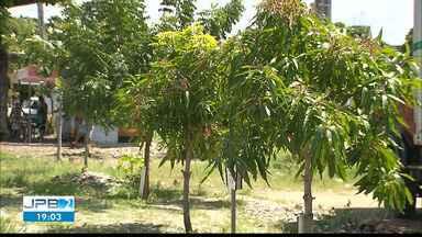 JPB2JP: Morador de Mangabeira planta árvores por conta própria e cria área verde - Semana do Meio Ambiente.