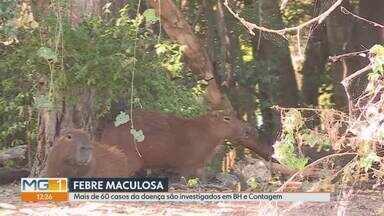 Belo Horizonte e Contagem investigam mais de 60 casos suspeitos de febre maculosa - Na capital, prefeitura informou que há 31 casos suspeitos. Em Contagem, são 32 notificações, sendo duas mortes confirmadas.