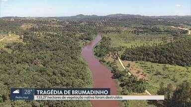 Tragédias em Mariana e Brumadinho devastaram mais de 1.600 hectares de vegetação - No Dia Mundial do Meio Ambiente saiba como estão áreas devastadas pela lama.