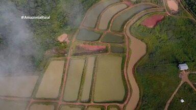Parte 3: Conheça os desafios da psicultura, em Rondônia - Saiba como fazer um hambúrguer feito com jambu.