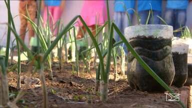 Escola orienta alunos sobre a sustentabilidade em Balsas - Alunos são orientados a fazer a reciclagem de material, cultivar uma horta orgânica e a preservar a água.