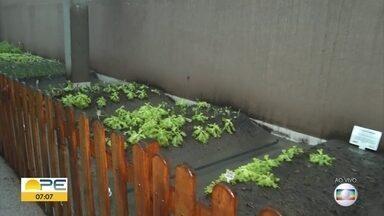 Moradores de prédios no Recife fazem horta na varanda para ter alimentos frescos em casa - Chamada de horta urbana, iniciativa traz mais saúde e socialização entre os moradores.