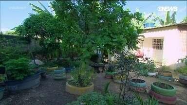 Projeto de horta urbana leva cidadania para mulheres do Recife