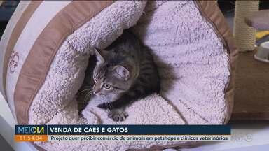 Projeto quer proibir comércio de animais em petshops e clínicas veterinárias - Todos os dias, pelo menos 30 denúncias de maus tratos a cães e gatos são registradas na rede de proteção animal em Curitiba.