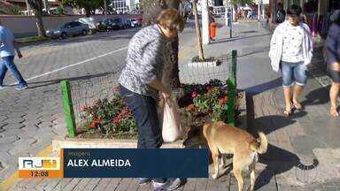 Cães comunitários são exemplo nas ruas de Nova Friburgo, no RJ - Assista a seguir.