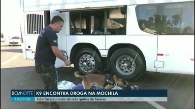 Cão farejador encontra droga em mochila - Cão farejou mais de três quilos de haxixe dentro da bolsa.