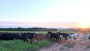 Sistema ILPF aumenta produtividade da soja e recupera áreas degradadas no Paraná - Essa técnica de integração sustentável tem recebido estímulo do cooperativismo agrícola