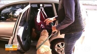 Como viajar nas férias com os animais - É preciso ter conforto, segurança e conferir as leis para o transporte