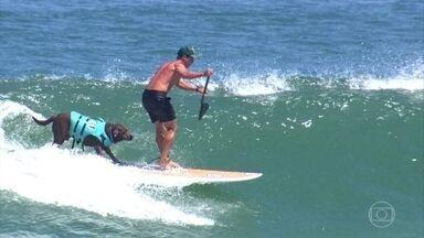 Apaixonado pelo mar, labrador de 8 anos é tetracampeão mundial de surfe - Além do amor pelo esporte, Bono e seu dono Ivan têm uma missão linda de solidariedade, que leva alegria para crianças que fazem tratamento contra o câncer.