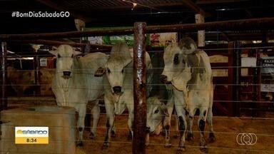 Rio Verde tem exposição agropecuária e rodeio - Conheça a festa sertaneja que acontece em julho na cidade.
