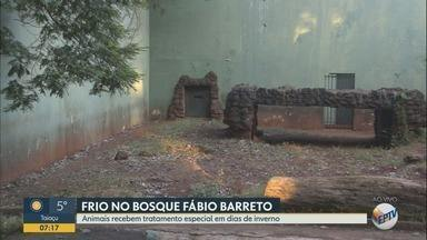 Bosque e Zoológico Fábio Barreto é opção de lazer no feriado em Ribeirão Preto - Animais recebem tratamento especial em dias de inverno.