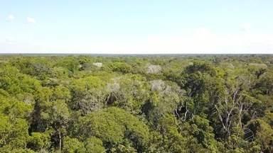Manejo na retirada de madeira - Processo detalhado identifica as espécies na floresta e a fase de desenvolvimento ideal para o corte.