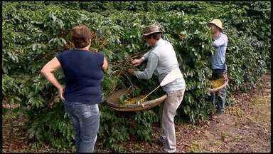 Procura por cafés especiais cresce no Espírito Santo - Produzir café especial dá trabalho, mas quem investe garante que o retorno é certo.