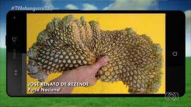 Telespectador envia foto de abacaxi com formato curioso - Telespectador envia foto de abacaxi com formato curioso
