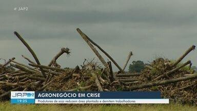 Agronegócio em crise no Amapá - Produtores de soja reduzem área plantada e demitem trabalhadores