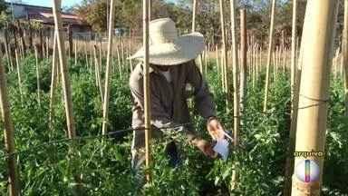 Projeto da Emater incentiva produtores rurais a mudarem modo de combate de pragas - Ideia é trocar agrotóxico por controle biológico com predadores naturais.