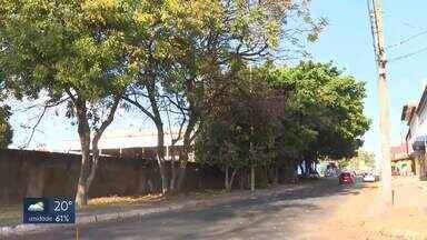 Moradores de Ceilândia reclamam da falta de poda de árvores - Segundo eles, o problema vem desde 2011. Eles pedem a poda para órgãos do governo, mas dizem que não são atendidos. As árvores já atingiram a rede elétrica e também esconderam as lâmpadas dos postes.