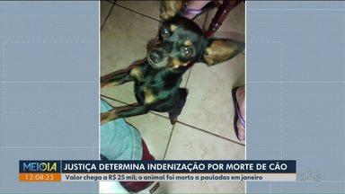 Justiça determina indenização por morte de cachorrinha - Mulher foi condenada a pagar R$ 25 mil.