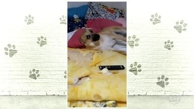 Conheça Chico, o cachorro que ficou famoso nas redes sociais - O Fantástico foi até Bauru, interior de São Paulo, ver de perto o estrago feito pelo bichinho bagunceiro de oito meses.
