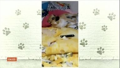 Cachorro vira celebridade depois de destruir o quarto da dona em Bauru, SP - O vídeo viralizou na internet.