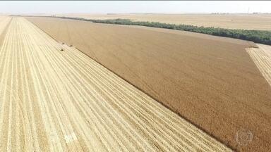 Brasil deve ter nova safra recorde de grãos - País pode colher 240 milhões de toneladas de grãos na safra deste ano.