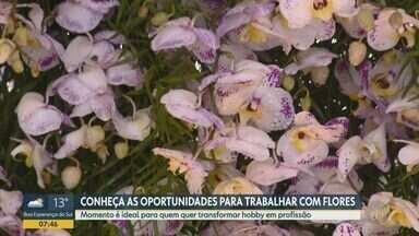 Sua Chance: confira opções de trabalho no mercado de flores - Cadeia produtora emprega milhares de pessoas.