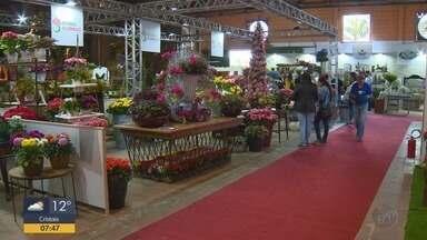 Mercado das flores: Momento é ideal para quem quer transformar hobby em profissão - Mercado das flores: Momento é ideal para quem quer transformar hobby em profissão