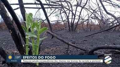Pesquisa estuda consequências das chamas nos biomas do Cerrado e do Pantanal - Levantamento está sendo oficialmente lançado durante o maior evento científico da América Latina, a 71ª Reunião Anual da Sociedade Brasileira para o Progresso da Ciência (SBPC), nesta semana, na UFMS.