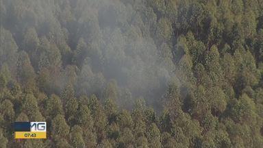 Incêndio atinge área de vegetação no bairro Água Limpa, em Nova Lima - Fumaça branca era vista do alto.