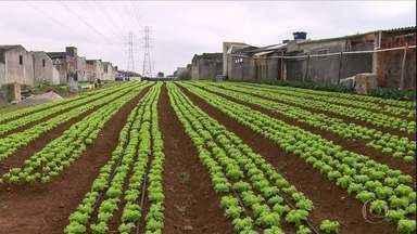 Globo Rural – Edição de 04/08/2019 - Programa mostra como a agricultura urbana está sendo feita na maior cidade do país. Você vai ver ainda os investimentos que suinocultores de Mato Grosso do Sul estão fazendo para aproveitar a demanda da China. E mais notícias do campo.