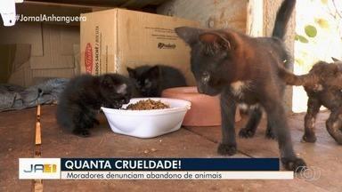 Voluntários fazem campanha para castrar e cuidar de gatos abandonados em parque de Goiânia - Comunidade junta tampas de garrafas plásticas para arrecadar fundos e castrar bichos antes de doá-los. Abrigo foi construído para acolher animais.