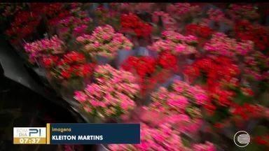 Festival de Flores de Holambra expõe diversas opções de mudas - Festival de Flores de Holambra expõe diversas opções de mudas