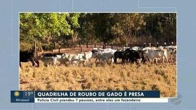 Polícia Civil prende quadrilha que atuava no roubo de gado em Cuiabá e Várzea Grande - Polícia Civil prende quadrilha que atuava no roubo de gado em Cuiabá e Várzea Grande
