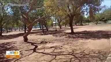 Vídeo mostra Parque do Bosque com vegetação seca e descuidada - Vídeo mostra Parque do Bosque com vegetação seca e descuidada