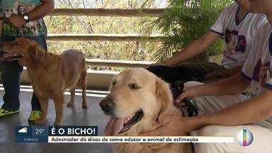 É o Bicho: Adestrador dá dicas para educar um animal de estimação - Coluna É o Bicho será exibida todas as quartas.