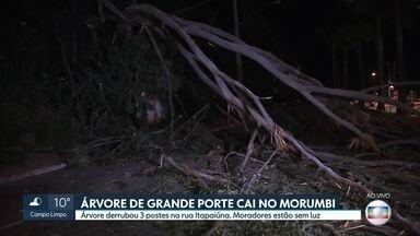 Árvore de porte grande cai no Morumbi e trânsito complica na região - Parte dos moradores da região está sem luz.