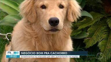 Investimentos no mercado pet está em crescimento no Sul do Rio - Além dos acessórios, equipamentos cirúrgicos sofisticados que trazem mais tranquilidade e conforto aos animais também são procurados.