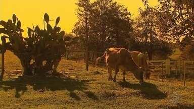 """Melhoramento genético tem sido aposta de pequenos criadores de gado de Boituva - O melhoramento genético tem sido aposta de pequenos criadores de gado de Boituva (SP) a partir da orientação de veterinários da Secretaria de Meio Ambiente pelo programa """"Pró-Rebanho""""."""