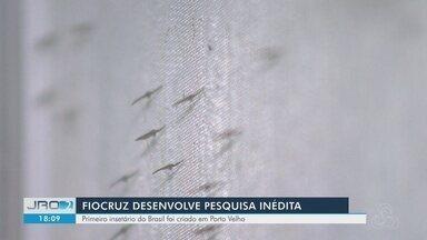Fiocruz cria colônia de mosquitos para estudar transmissor da malária em RO - Pesquisa da fundação é pioneira no país.