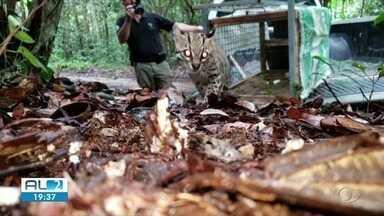 Dezenas de animais são soltos na natureza após fiscalizações da FPI - Foram cerca de 50 pássaros e uma jaguatirica.