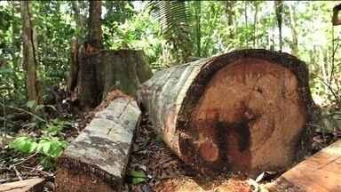 Destruição na Floresta Amazônica cresceu 15% em um ano - O Instituto Imazon alerta sobre o desmatamento. Entre agosto de 2018 e julho de 2019 a floresta perdeu mais de 5 mil quilômetros quadrados de vegetação nativa. A área devastada é equivalente a 500 mil campos de futebol.
