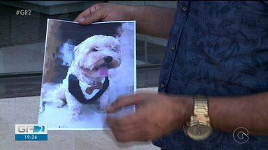 Furto de cães vem crescendo na cidade de Petrolina - Os donos dos animais desaparecidos estão utilizando as redes sociais para tentar encontrar os pets.