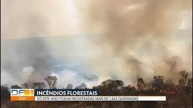 Só este ano foram registrados mais de 4500 incêndios florestais - Segundo os bombeiros o número já é maior do que o mesmo período do ano passado.
