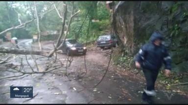 Árvore cai na estrada do Guaraú e bloqueia pista em Peruíbe, SP - Galhos atingiram a fiação da rede elétrica nesta madrugada (20).