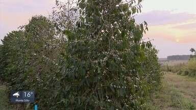 Impactos das condições climáticas na lavoura do café são discutidos em fórum em Guaxupé - Impactos das condições climáticas na lavoura do café são discutidos em fórum em Guaxupé