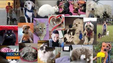 Telespectadores mandam fotos de seus pets - Todo mundo quer ver seu bichinho de estimação no Meio-Dia Paraná.