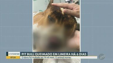 Homem que queimou pitbull em Limeira é multado em R$ 14 mil por agressão e maus tratos tr - Imagens de câmera de segurança mostram momento que dono coloca fogo no cachorro. O animal morreu.
