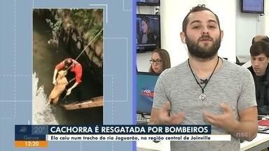 Cachorra é resgatada por Bombeiros em Joinville - Cachorra é resgatada por Bombeiros em Joinville