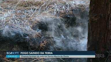 Chamas brotam do solo em Santa Maria do Oeste - Fogo se espalha pelo subsolo e queima pinheiros pela raiz em área de reflorestamento. Especialista explica o motivo.