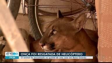 Onça que aparece em casa em Baixo Guandu é resgatada por helicóptero, no ES - Animal foi levado para a reserva de Sooretama.